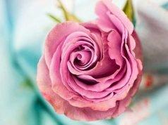 livraison de fleur